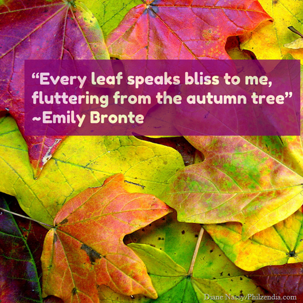 """Every leaf speaks bliss to me, fluttering from the autumn tree"" Emily Bronte quotes2 (1)"