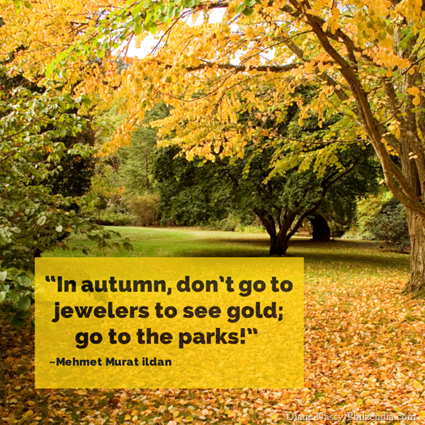 """In autumn, don't go to jewelers to see gold; go to the parks!"" ― Mehmet Murat ildan"