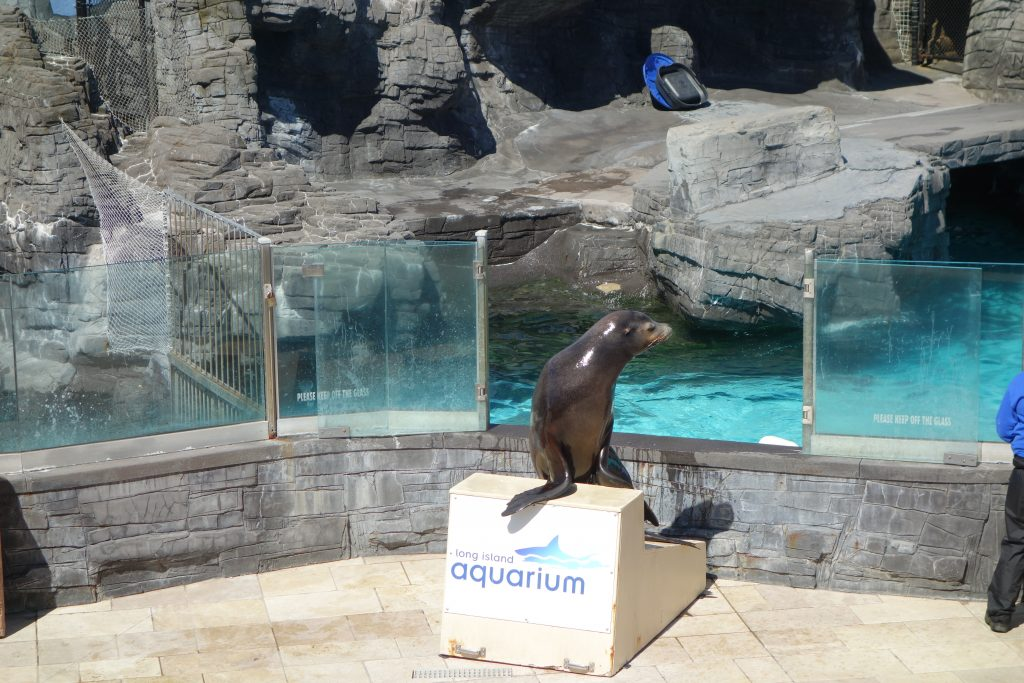Sea Lion show at The long Island Aquarium