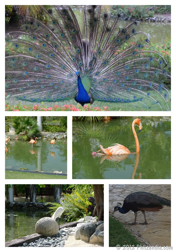 Birds we saw in Punta Cana